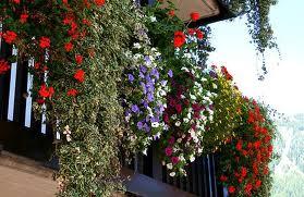 Leader.Geranium and Flowering plants