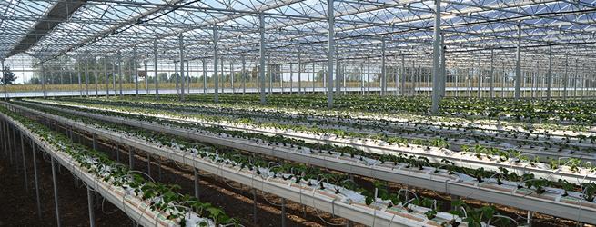 Coltivazioni fuori suolo